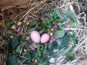 eggs-WEB